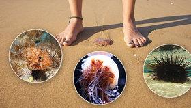 Co všechno na vás číhá v moři?