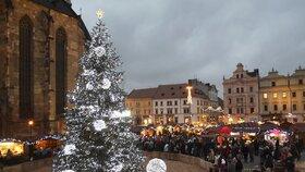 Už to začíná! Plzeň hledá vánoční strom: Chtěla by smrk nebo douglasku asi 15 m  vysokou