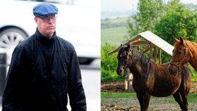 Nad stádem koní zoofil honí: Deviant půjde kvůli zvrácenému hobby do vězení