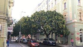 Zalesněná Praha? Na podzim nechá město vysadit téměř 26 tisíc stromů