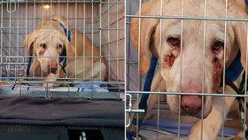 Český řidič za hranicemi vyhodil zbídačenou fenku: Zvíře má na hlavě hluboké krvavé rány