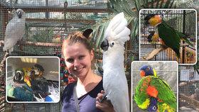 V Botanické zahradě vystavují opeřené exoty: Létající drahokamy, neposedné kakadu nebo papoušky ara