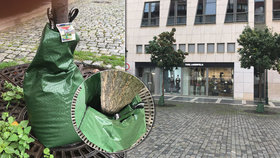 Stromy v Praze obalují speciální vaky na vodu. 60 litrů jim vydrží až 9 hodin