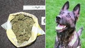 Čtyřnohá policistka Fatima má neomylný čich: V autě našla marihuanu, v trávě pervitin