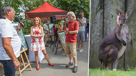Tonda pokřtil Tondu! Mládě klokana horského z pražské zoo dostalo jméno po fotbalové legendě