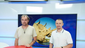 Vysílali jsme: Umělé oplodnění. Nová naděje pro nosorožce?