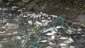 Masakr na Heřmanickém rybníku: Tisíce ryb uhynuly, ve vodě nebyl kyslík kvůli sinicím