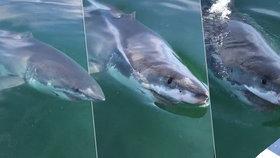 Vyděšení rybáři natočili velkého bílého žraloka: Monstrum na ně náhle zaútočilo!