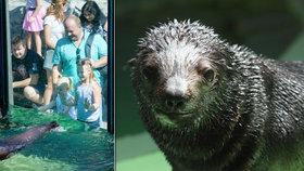 Lachtánek z pražské zoo je Eda! Jméno mu vybrali čtenáři Blesku
