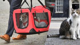 """Johnson s """"vydřičkou"""" stěhují do sídla premiérů štěně. Dostane kocour Larry padáka?"""