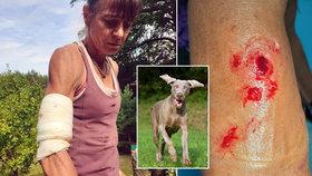 Vědkyně Alena přežila střet s lidojedy, doma v Blansku ji potrhal pes