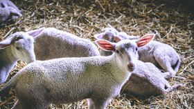 Výlety s dětmi za zvířátky: Vezměte je na bio farmu