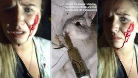 Kvůli ochráncům zvířat farmáři utratili na 100 králíků! Aktivisti zachránili jen 16 zvířat