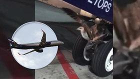 Kormorán narazil do podvozku Boeingu 737. První pomoc poskytovali mechanici