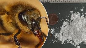 """Konec policejních psů? Drogy dokážou hledat i včely, odborník zmínil """"superčich"""""""