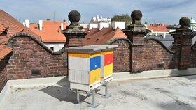 Plzeňský magistrát včelaří: Na střeše radnice vyrostly dva úly, med budou rozdávat