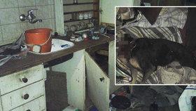 Byt hrůzy v Pardubicích: Mrtvý pes bez hlavy, potkani, zápach a podlaha pokrytá výkaly!