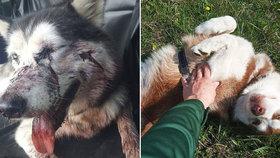 Davidovi někdo postřelil fenku huskyho Maju. Druhá fenečka Sara se nenašla