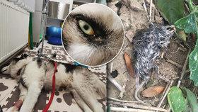 Stutox prý přiotrávil psa na Opavsku: Na procházce asi sežral otráveného hraboše