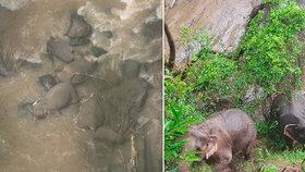 Stádo slonů chtělo zachránit mládě před pádem do vodopádů! Uhynuli všichni