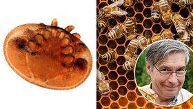 Včela je nejdůležitější tvor na planetě a závisí na ní 70 % zemědělství světa, vyhlásili vědci! Překvapí vás, kde se bez nich neobejdeme!