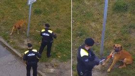 Drama v České Lípě: Policie střílela po psovi agresivních opilců