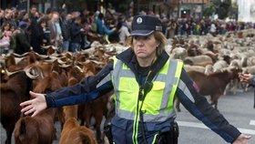 Všude samé kozy. Ulice Madridu zaplavily stovky přežvýkavců, je to tradice
