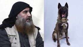 Pes zraněný při útoku na Bagdádího se zotavuje. Je to fena a jmenuje se Conan