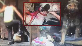 Otřesné! Na Slovensku pořádají děti psí zápasy: Umírající zvířata končí v jímce!