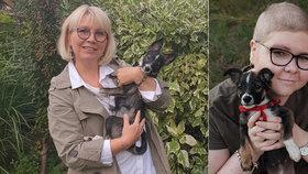 Fenka u chovatele trpěla ve smečce: V nové rodině pomáhá dívce po transplantaci