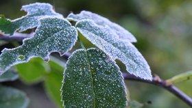 Česko zažije teplo a deštivo, mráz dorazí na konci týdne. Místy napadne i sníh