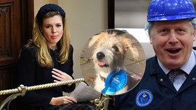 """Johnson sází v předvolební řeži na """"vydřičku"""" a štěně. A slibuje """"ženovládu"""""""