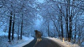 V Česku napadne až 10 centimetrů sněhu. Pozor i na náledí, sledujte radar Blesku