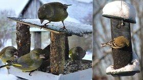 Jak správně vzimě krmit ptáky: Šéfka veterinářů prozradila, co děláme špatně