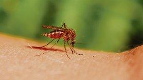 Pisklavý hmyz dokáže pořádně otrávit dovolenou. Jak zatočit s komáry?