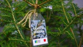 Ekologický vánoční stromek: Lesy hlavního města potřetí prodávají vánoční jedle s budoucností