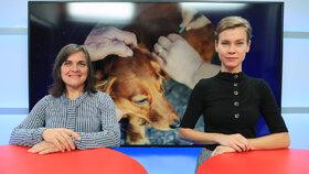 """Povinné čipy pro české psy: """"Má to smysl,"""" říká veterinářka. Zatočí to s množírnami?"""