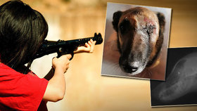 Bestie vystřelila oko fence Nessie: Speciálně upravenou municí! Lidé slibují pomstu!