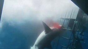 Další smrtelný útok žraloka: Predátor zabil mladého surfaře