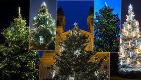 Velký přehled vánočních stromů: Takhle je ozdobili v městských částech. Který je váš favorit?