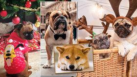 Vydělají peníze páníčkům? Tohle jsou české psí celebrity. Roztomilé i bojující s množírnami