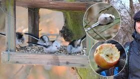 Zachránce žižkovského ptactva Michal: Plastová krmítka z Vítkova zmizí