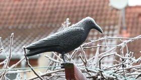 Teploty v Česku spadly k -16 °C. Noční mrazy nás budou provázet do pátku