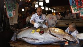 Za tuňáka dal 40 milionů: Majitel sushi řetězce zvítězil v rybí aukci
