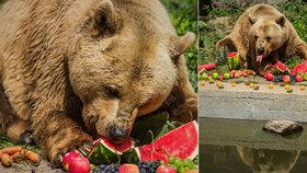 Zemřel legendární medvěd Medoušek: Den před narozeninami ho museli uspat