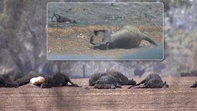 Klokaní ráj lehl popelem. Austrálie je na pokraji katastrofy, snímek vyrazil dech