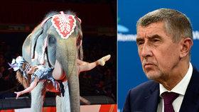 Konec divokých zvířat v cirkusech? Ochránci získali silného spojence v Babišovi