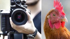 Pes zakousl filmovou hvězdu s rozjetou kariérou: Pokuta 15 tisíc za slepici