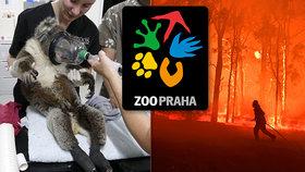 Velká vlna solidarity: Pražská zoo pošle na pomoc Austrálii 13,5 milionu, přispěly již tisíce lidí