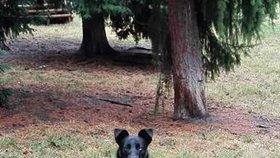 Šlohnou psa a pak čekají na odměnu: Pejskaři v Dejvicích zažívají peklo
